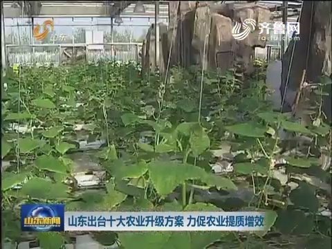山东出台十大农业升级方案 力促农业提质增效