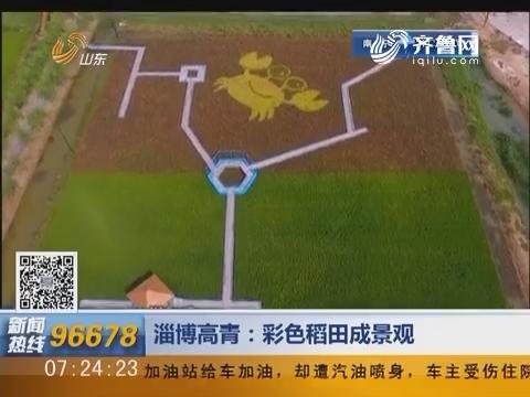 淄博高青:彩色稻田成景观