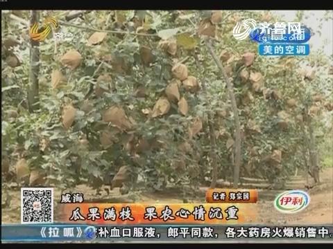 威海:瓜果满枝 果农心情沉重