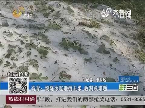 高青:突降冰雹砸倒玉米 收割成难题