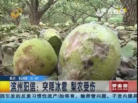 滨州阳信:突降冰雹 梨农受伤