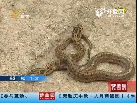 日照:吓人!家中惊现双头蛇