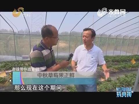 老徐带你逛果园:中秋草莓果正鲜