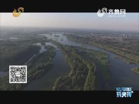 寻找山东最美湿地:青州弥河湿地