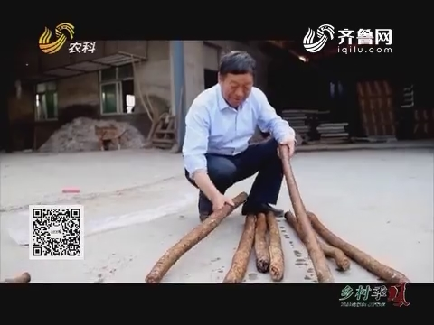 中国种植匠:异国遇牛蒡 取种获丰收
