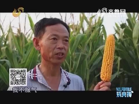 """""""农大肥业""""杯2016山东粮王大赛 """"鲁东王""""剑指总冠军"""