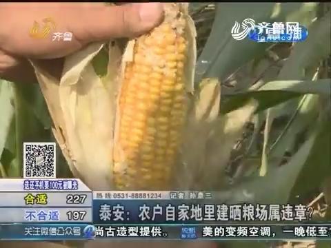 泰安:农户自家地里建晒粮场属违章?