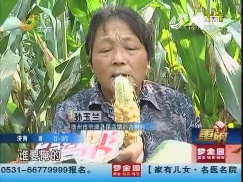 【重磅】德州:眼看秋收 玉米为啥大量减产?