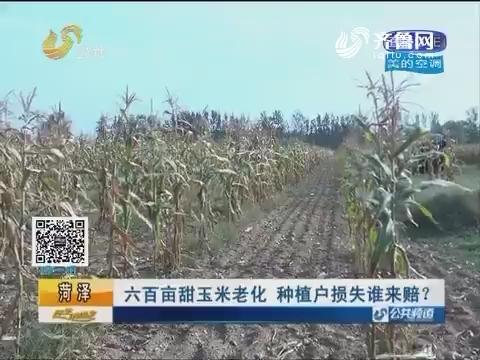 菏泽:六百亩甜玉米老化 种植户损失谁来赔?