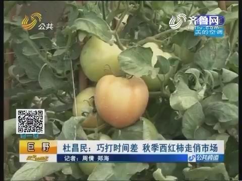 【巨野】杜昌民:巧打时间差 秋季西红柿走俏市场