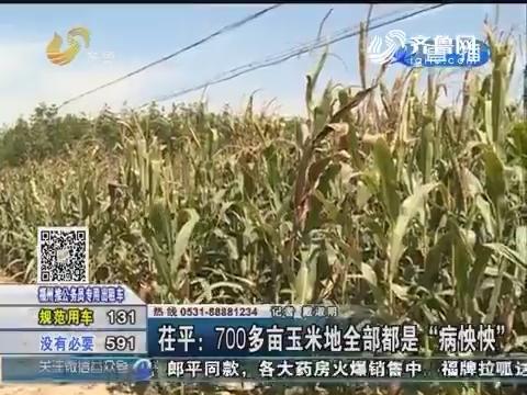 """茌平:700多亩玉米地全部都是""""病怏怏"""""""