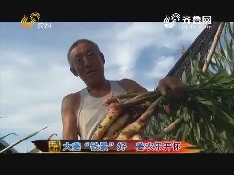 """20160926《品牌农资龙虎榜》:大姜""""钱景""""好 姜农乐开怀"""