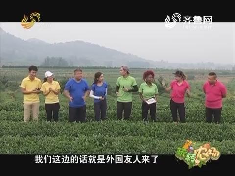 20160926《玩转农场》:走进日照淞晨茶园
