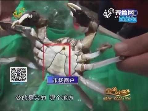 济南:又到一年吃蟹时 教您如何选螃蟹
