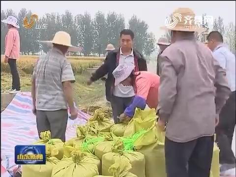 莒县:攻关田水稻亩产980公斤 连续三年创北方超级稻世界纪录