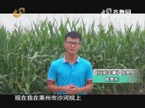 20160927《当前农事》:中澳益宇小麦原种