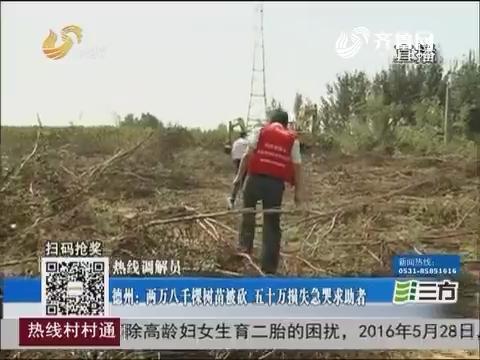 【热线调解员】德州:两万八千棵树苗被砍 五十万损失急哭求助者