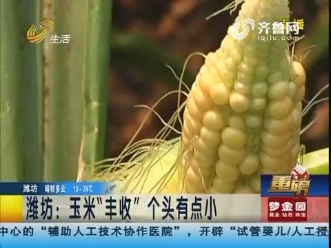 """【重磅】潍坊:玉米""""丰收""""个头有点小"""