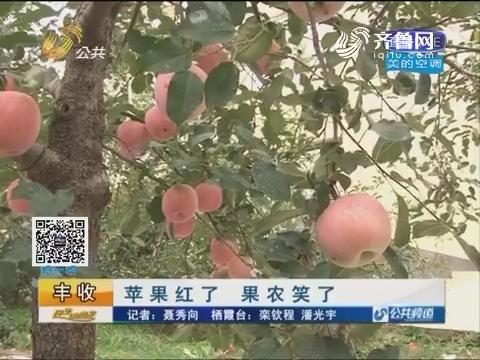 【丰收】栖霞:苹果红了 果农笑了
