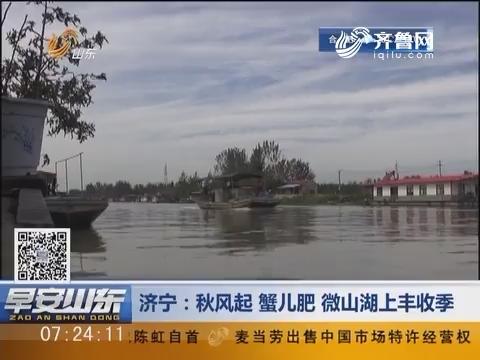 济宁:秋风起 蟹儿肥 微山湖上丰收季