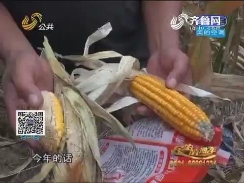 潍坊:300亩玉米莫名绝产 农户损30余万