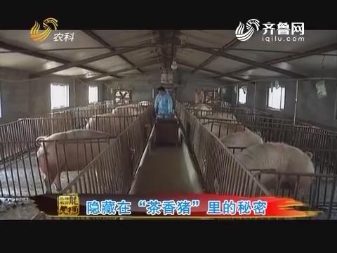 """20161017《品牌农资龙虎榜》:隐藏在""""茶香猪""""里的秘密"""