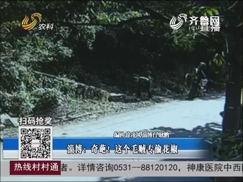 淄博:奇葩!这个毛贼专偷花椒