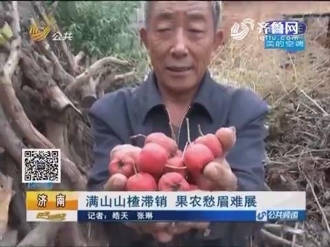 济南:满山山楂滞销 果农愁眉难展