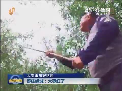 大美山东好秋色 枣庄峄城:大枣红了