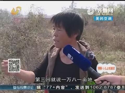 潍坊:承包合同未到期 几百棵树被砍掉?