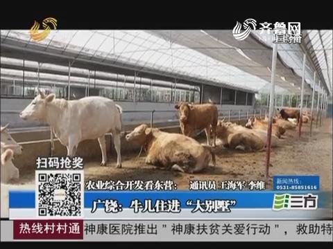 """【农业综合开发看东营】广饶:牛儿住进""""大别墅"""""""