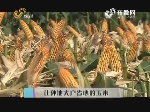 让种地大户省心的玉米