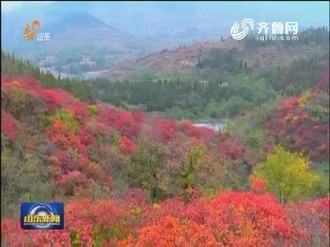 大美山东好秋色:秋色美 山水趣