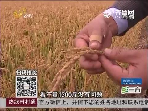 农业综合开发看东营 利津:盐碱地变良田