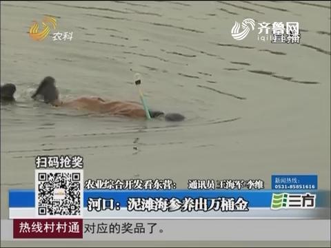 【农业综合开发看东营】河口:泥滩海参养出万桶金