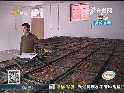 济南:万斤橘子 堆在仓库不敢动