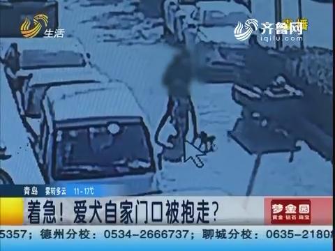 济南:着急!爱犬自家门口被抱走?