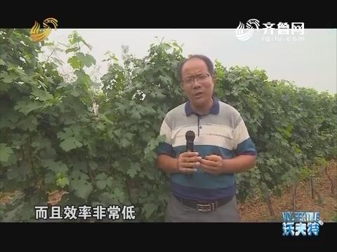 老徐带你逛果园:葡萄园除草机械化