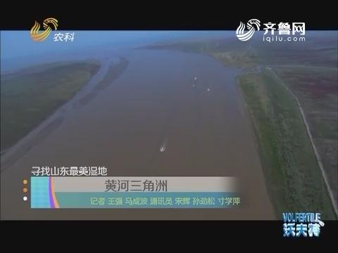 寻找山东最美湿地:黄河三角洲