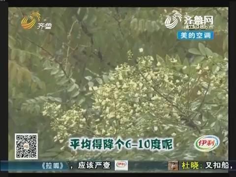 淄博:稀罕!大冷天里赏槐花