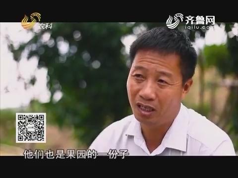 中国种植匠:叶少东独具匠心 情深柑脆