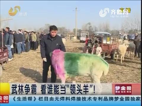 """菏泽:武林争霸 看谁能当""""领头羊""""!"""