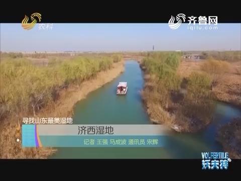 寻找山东最美湿地:济西湿地