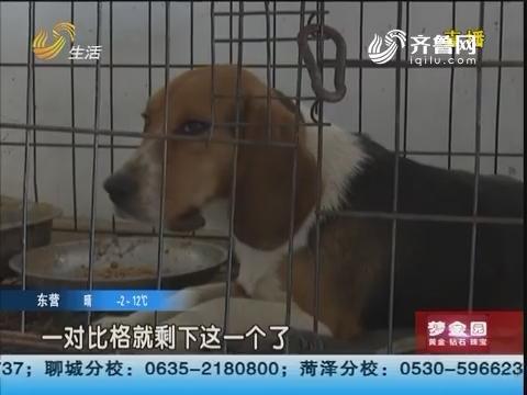 济宁:蹊跷!13条名犬一天内死亡