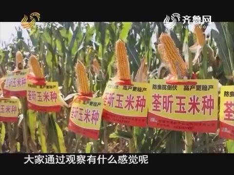 20161202《当前农事》:中澳益宇荃昕玉米种