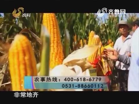 20161203《当前农事》:中澳益宇荃昕玉米种