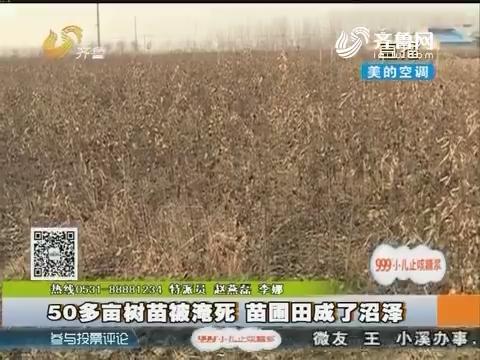 新泰:50多亩树苗被淹死 苗圃田成了沼泽