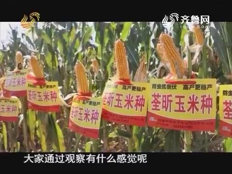 20161204《当前农事》:中澳益宇荃昕玉米种