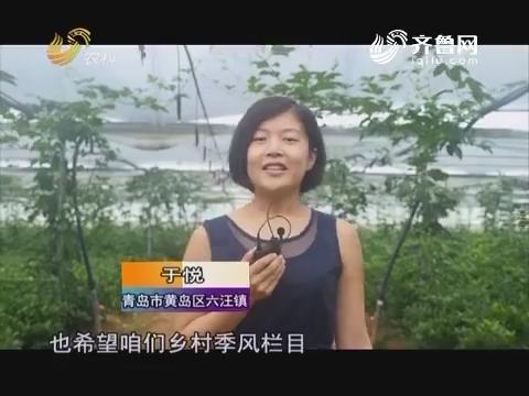 祝福乡村季风20周年 越办越好 收视长虹