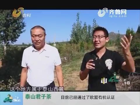 20161205《中国原产递》:泰山君子茶